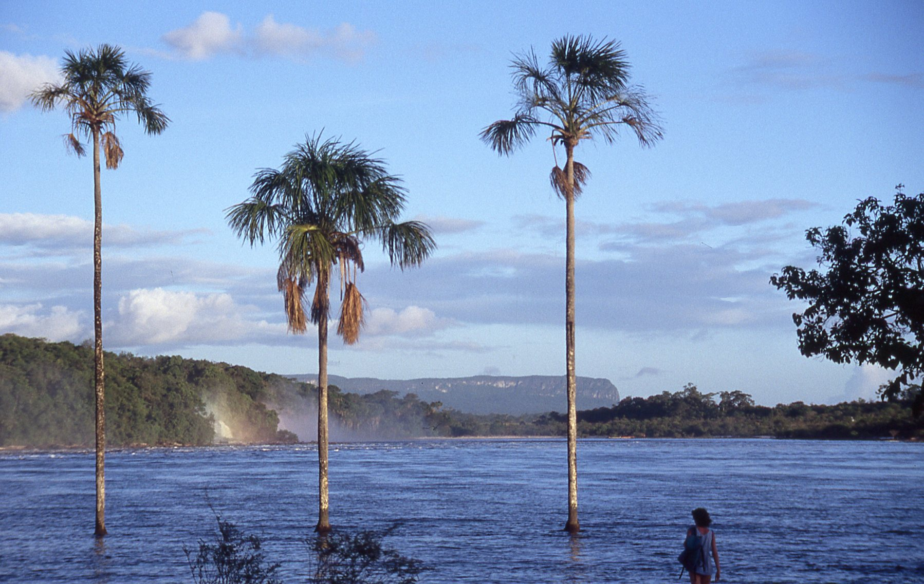 3 palm Canaima © JonoVernon-Powell.com