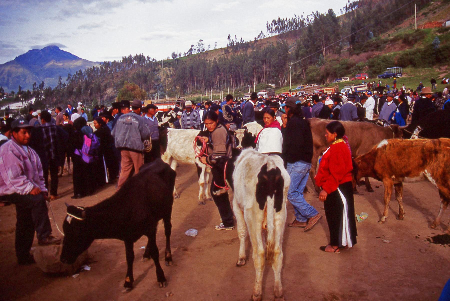 Ecuador Cattle market © JonoVernon-Powell