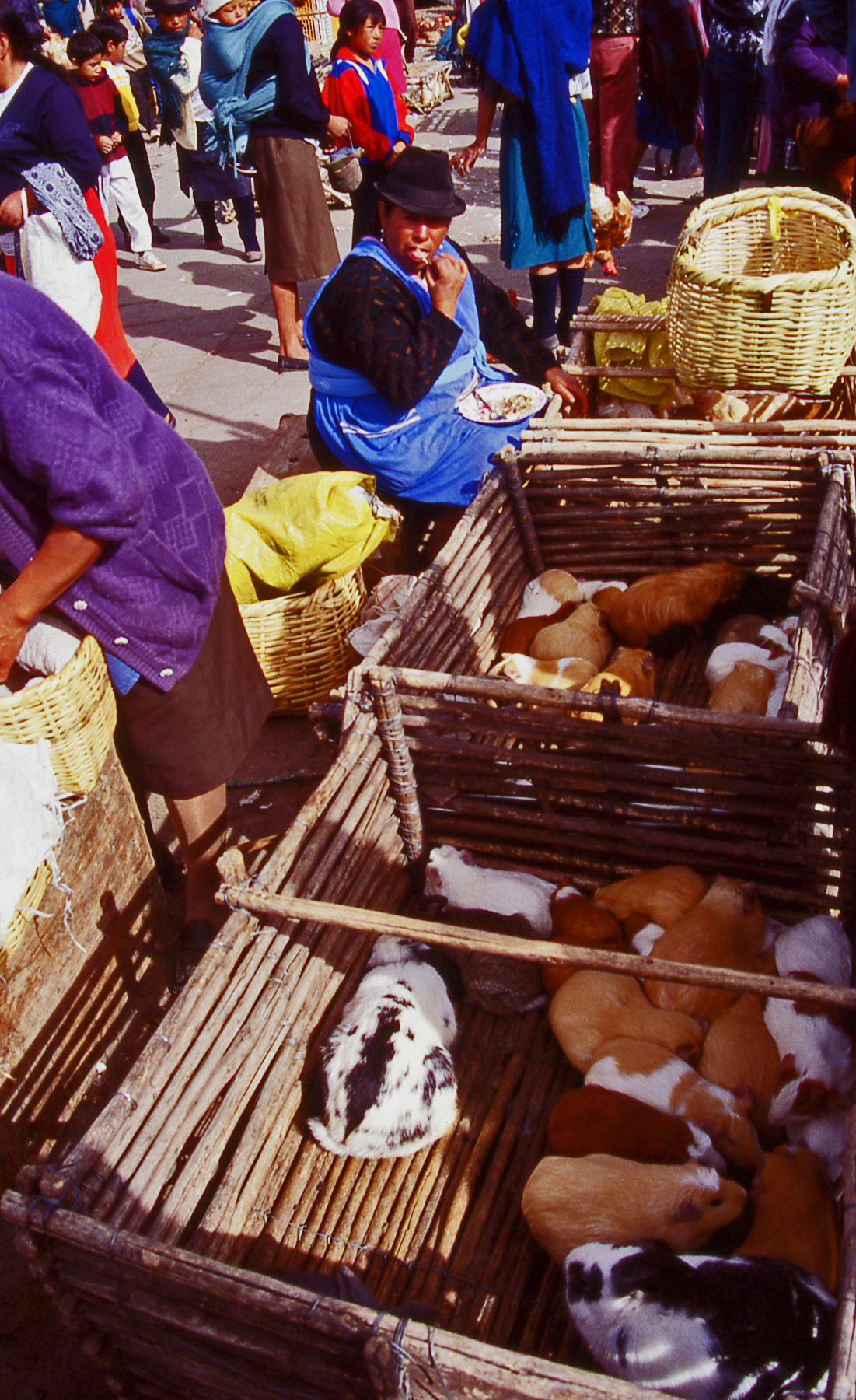 Guinea pig sales Ecuador © JonoVernon-Powell