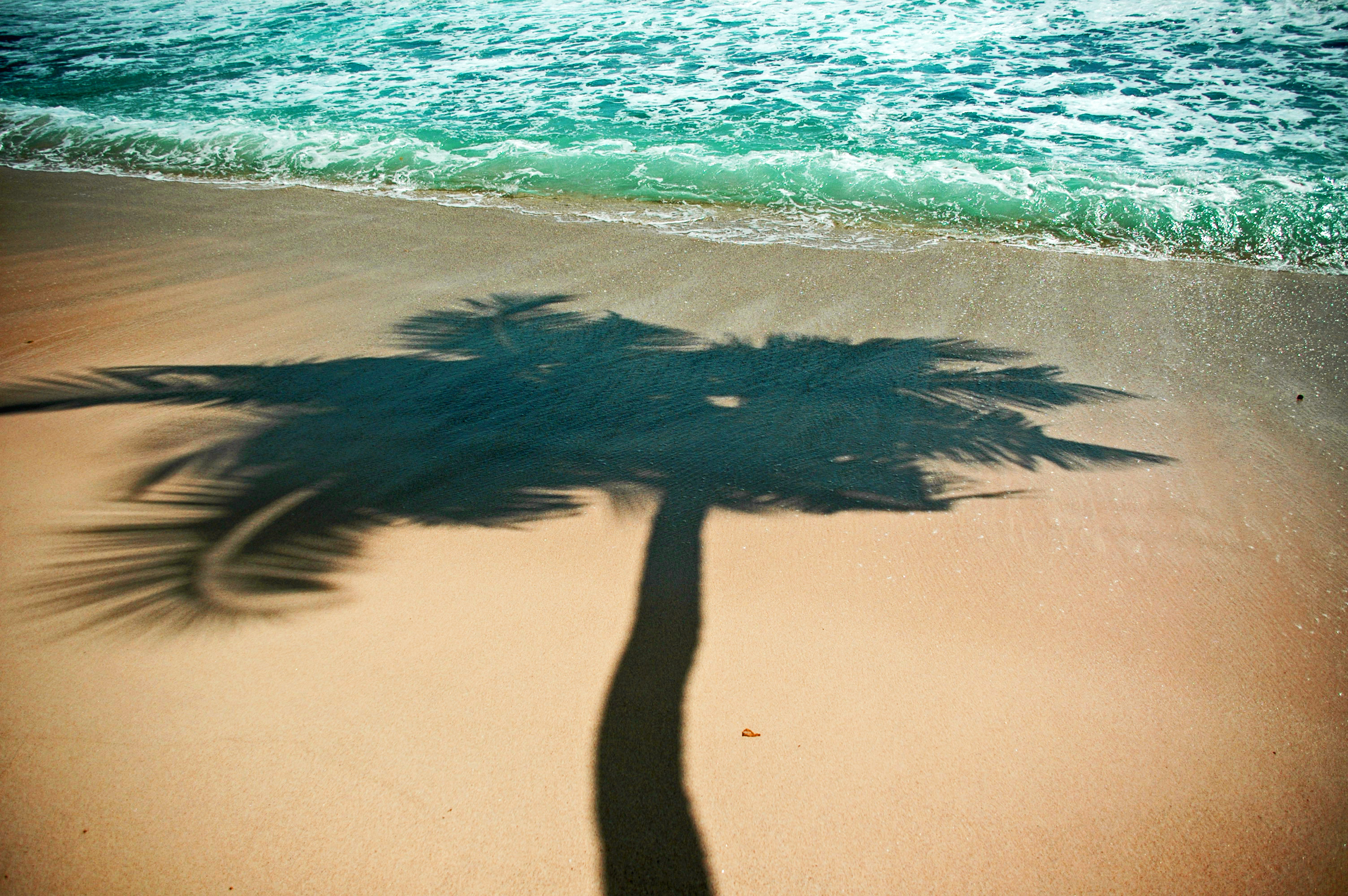 Seychelles Palm Shadow © JonoVernon-Powell