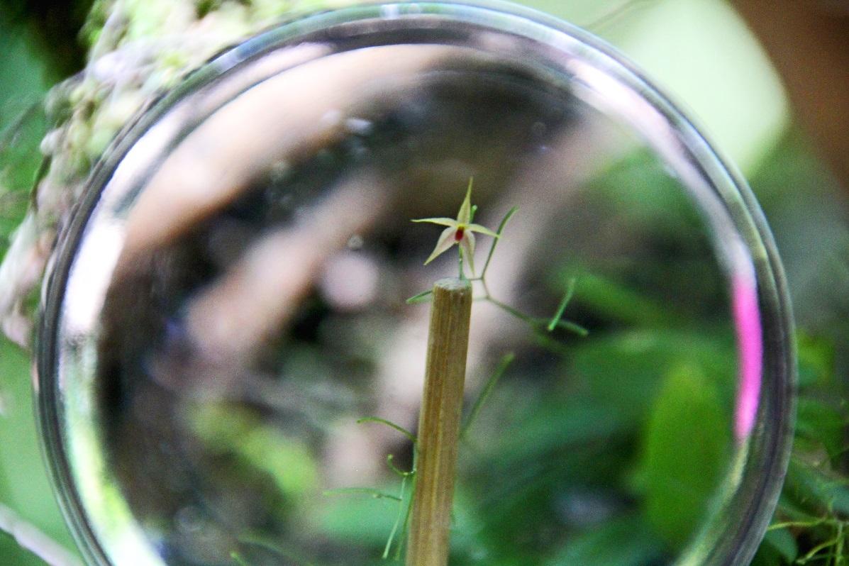 Micro thumb nail orchid © Nomadic Thoughts.com