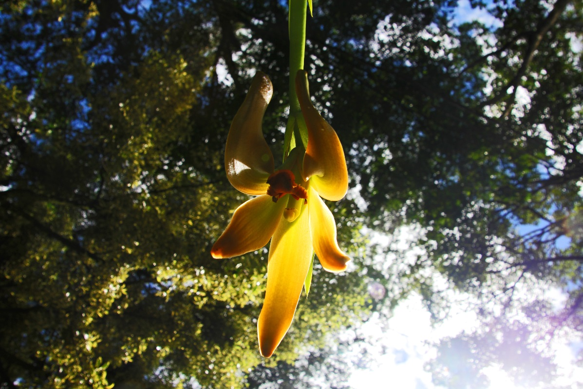 Yellow orchid Macchu Pichu © Nomadic Thoughts.com