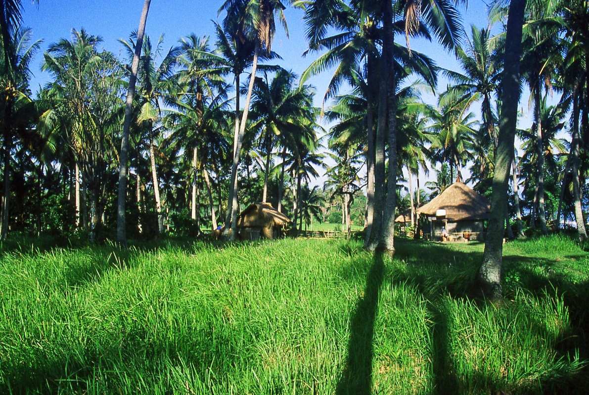 Indonesia lush & green © Nomadic Thoughts.com