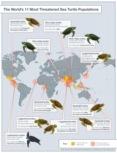 conservation.org - Turtles In Trouble Map