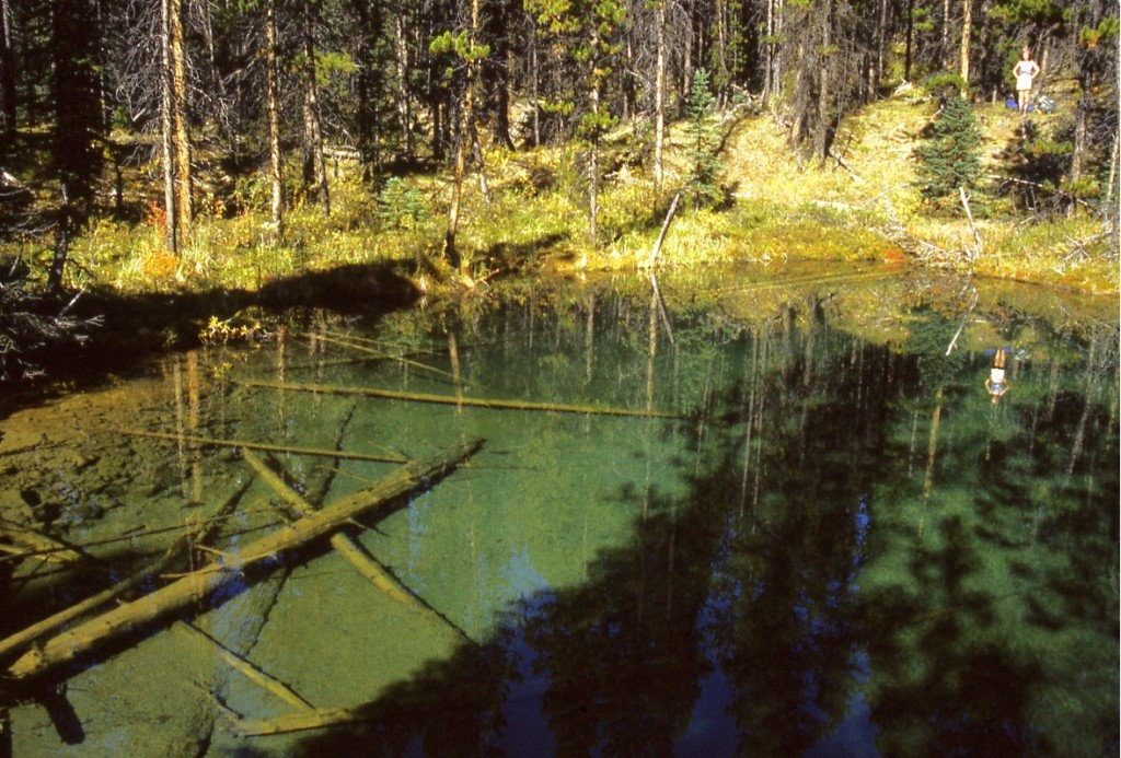 Forest Pond Banff National Park.jpg copyright-nomadic-thoughts-worldwide-travel