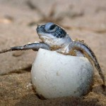 WWF - Turtle Protection on land & at sea
