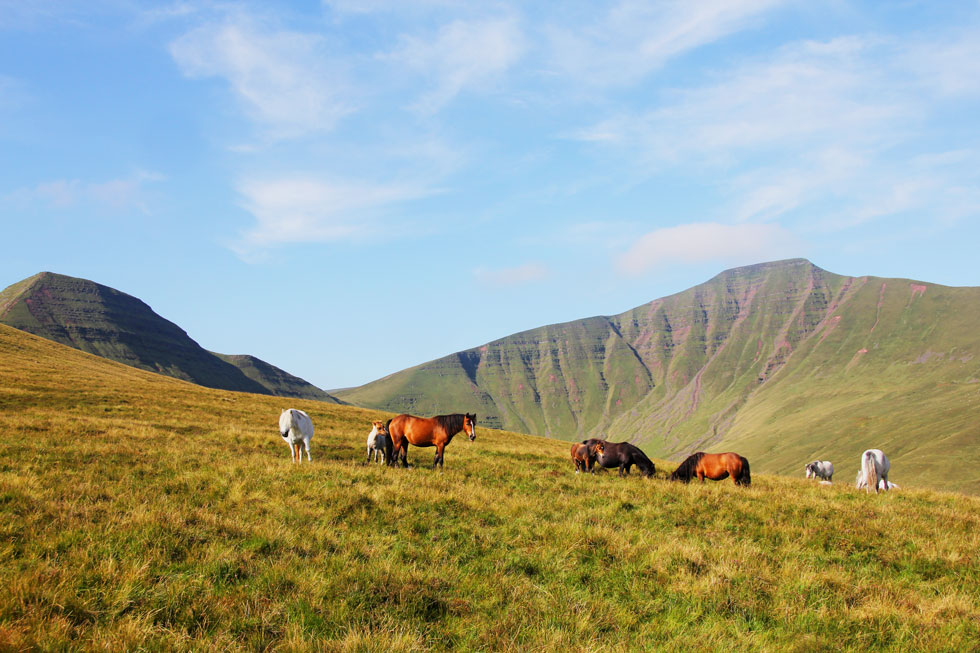 Wild horses below Fan-y-big