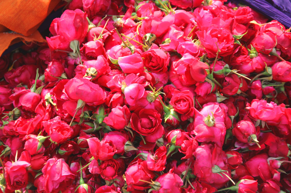 Indian-roses-copyright-noma