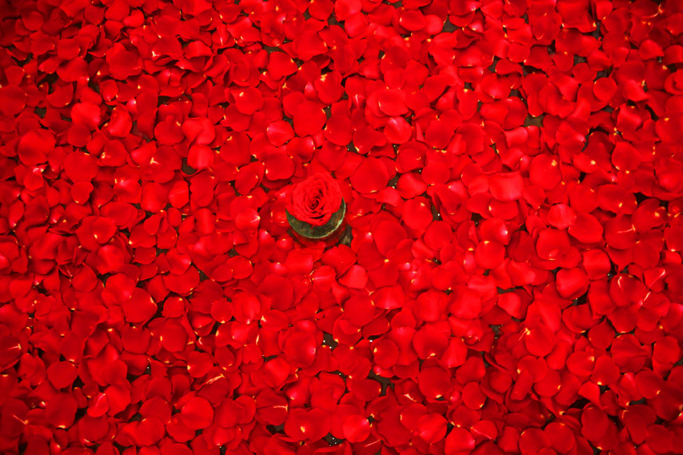 sea-of-rose-petals-copyrigh