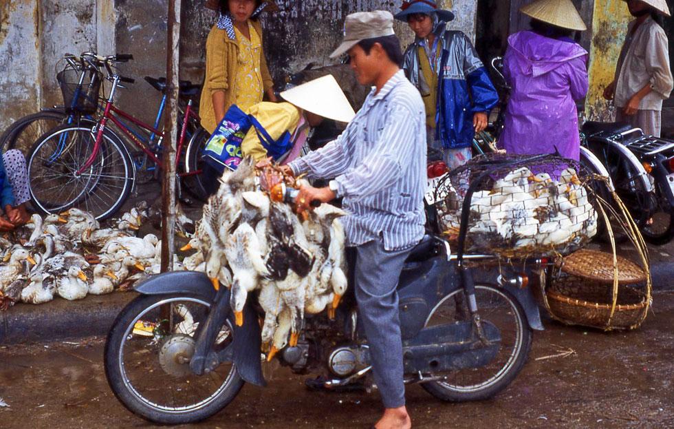 moped-duck-carrier-copyrigh