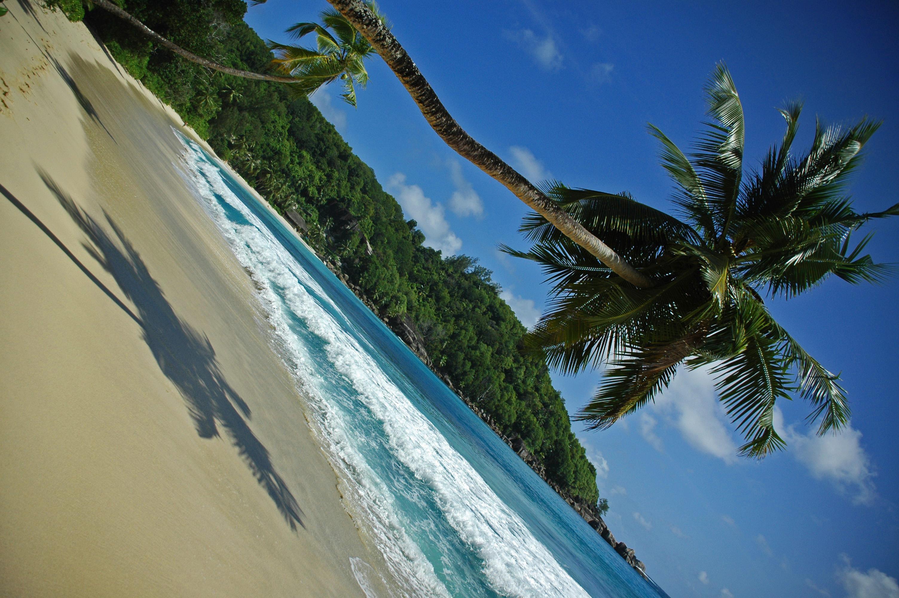 Beach Palm Seychelles © JonoVernon-Powell