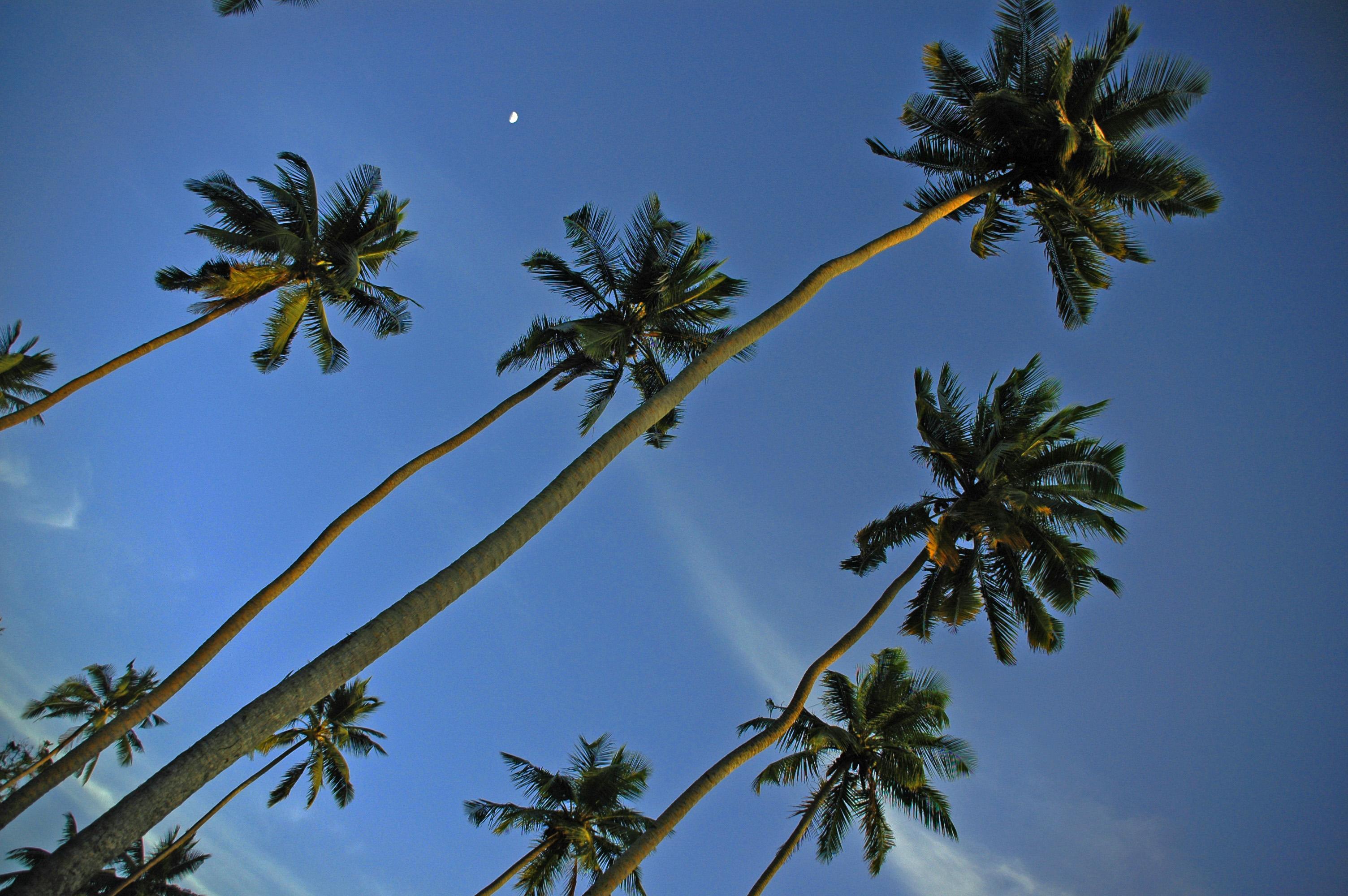 Island Palms Secychelles © JonoVernon-Powell