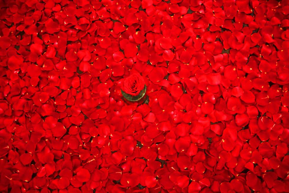 sea-of-rose-petals-copyrigh